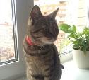 Кошка ищет хозяев - прежних или новых