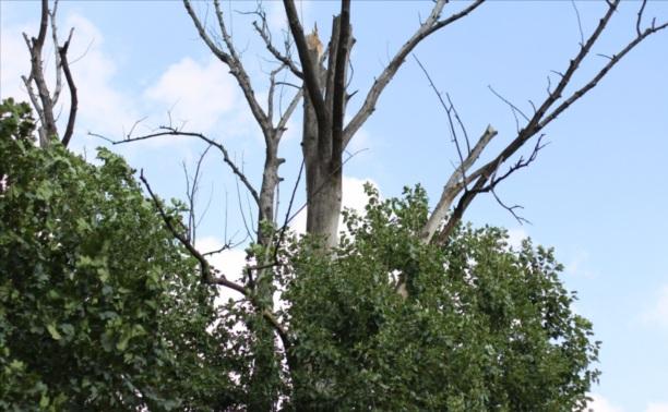 Чтобы погасить дерево на Михеева, ему вырубили сердцевину