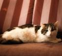 Кошка Молли была спасена из жутких условий и теперь ищет дом