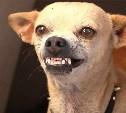 Пьяная собака хвосту не хозяйка!