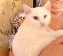 Ищем семью для слепого котенка по имени Зайка