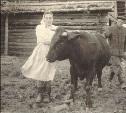20 августа: жителям Тулы запретили иметь коров в домашнем хозяйстве