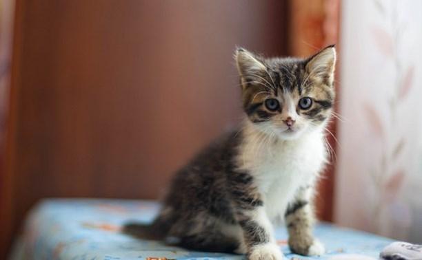 Кошки разных мастей и характеров - выбирайте!