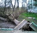 Последствия вчерашнего урагана в Туле