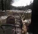 Почему деревья в ЦПКиО калечат людей и за это никто не отвечает?