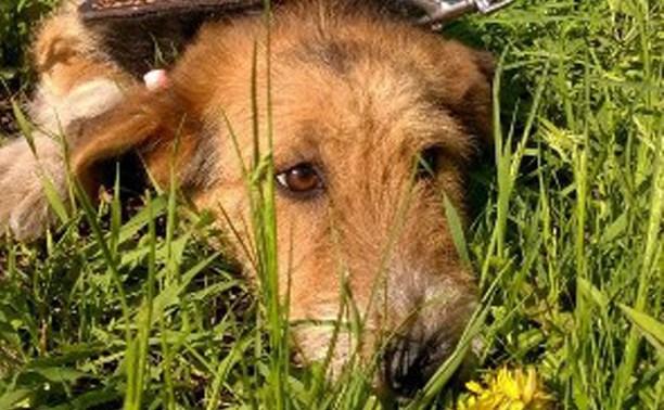 Обращение собаки Вари к будущему хозяину