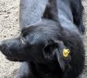 Кое-что о бродячих собаках, ОСВ и инициативах ОНФ.