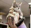 Кошечке и двум котам срочно нужна семья