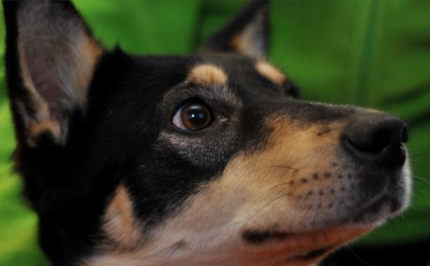 Помогите искалеченной собаке пережить зиму!
