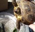 поймали черепаху