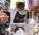 7 собак и 7 котиков ищут дом