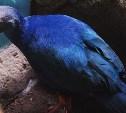 Голосуем за кадры в синем цвете