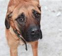Хозяева бросили собаку в квартире без еды и воды