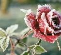 Зима и розы: сад чудесный!