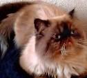 Хозяева просят вернуть кота за вознаграждение!