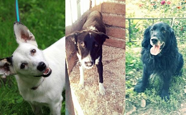 Белка, Бим и спаниель - прекрасные собаки в поисках дома