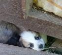 Щенков хотят отравить. Помогите найти им дом