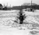 Новый год по-советски: лучшие архивные кадры найдены