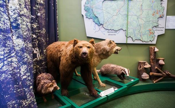 Тульский областной краеведческий музей: Бивни мамонта, редкие книги и клады Золотой Орды