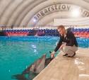 Есть такая профессия – дельфинов тренировать