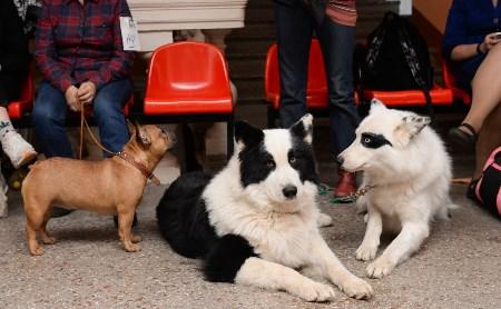 Бэби, щенки, юниоры: большой фоторепортаж с выставки собак
