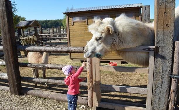 Экофермы, зоопарки, живые уголки: 7 мест, где можно посмотреть животных