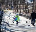 Солнечный день в тульских парках: виртуальная прогулка