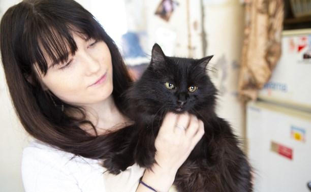 Тулячка пристроила больше сотни бездомных кошек и собак