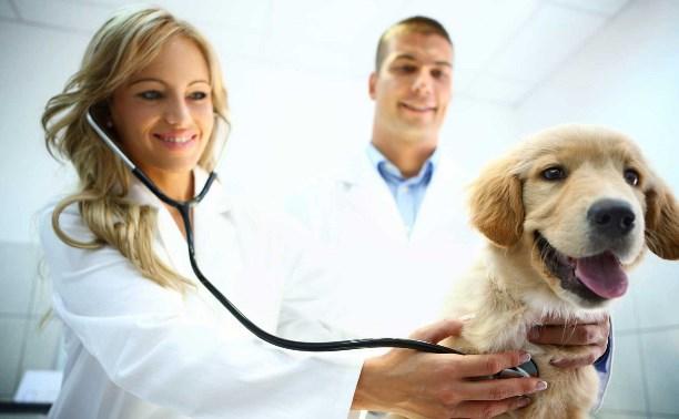 Советы ветеринаров: забота о здоровье питомцев осенью