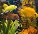 «Аквакласс» в Туле: Аквариумные рыбки, гекконы, пауки и другие экзотические животные