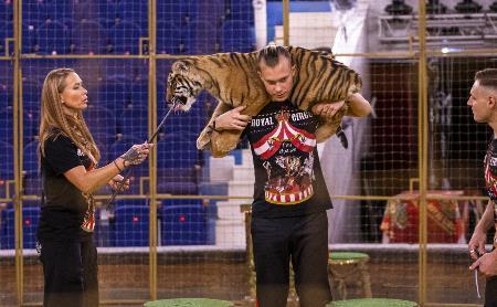 Фитнес для тигрят: как воспитываются будущие звезды цирка?