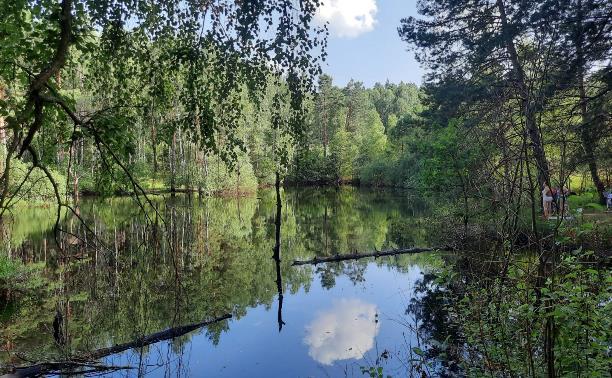 Наедине с природой: пять секретных мест у воды в Тульской области
