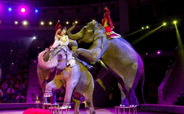 Слоны, львы и дикобразы ждут вас в Тульском цирке