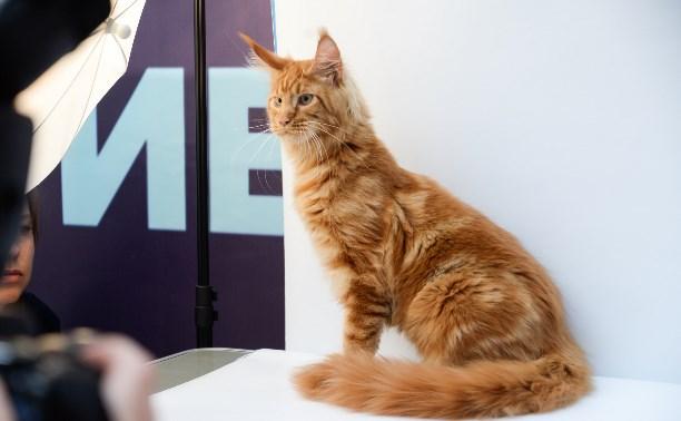 В Туле прошла выставка «Пряничных кошек»: фоторепортаж