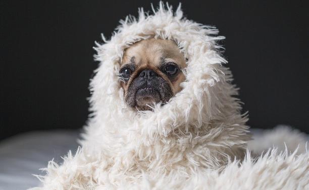Товары для животных и ветеринарные услуги: обзор Myslo
