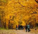 Золотая осень в Туле: 130 красивых фотографий