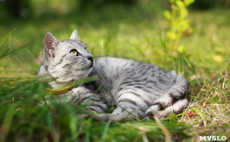 Мурчащие, уютные, нежные и суровые: 80 фото тульских котов