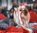 Корги, пудель, акита-ину, йоркширский терьер: в Туле прошла выставка собак