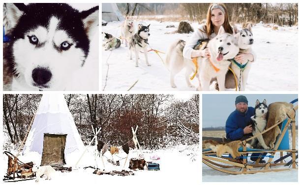 Хаски, лайки и экотуризм: как собаки сподвигли тульскую семью переехать жить в деревню
