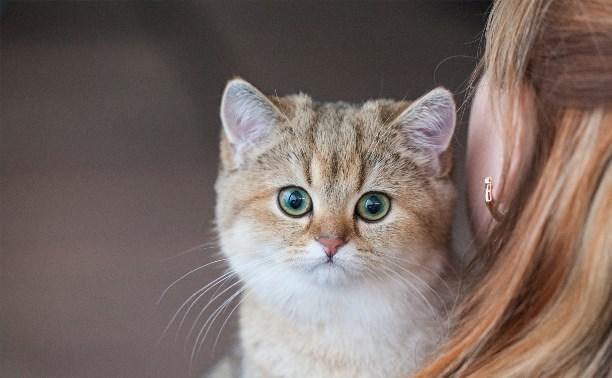 В Туле прошла выставка «Пряничные кошки»