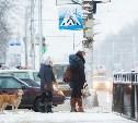 Снежная сказка на улицах Тулы