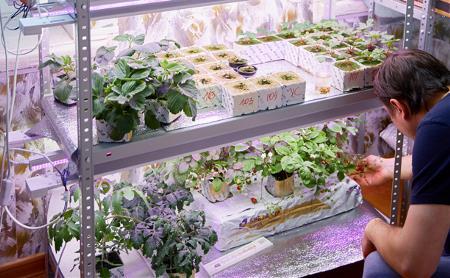 Туляки создали сити-ферму и едят свои ягоды и овощи даже зимой
