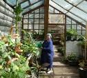 Травы и цветы Ясной Поляны: Раскрываем секреты толстовского огорода