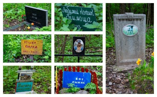 Тульское кладбище домашних животных: последний приют друзей, ушедших за радугу