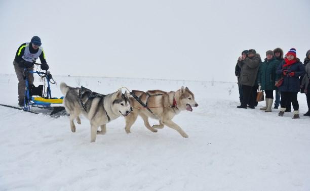 Праздник северных собак на Куликовом поле