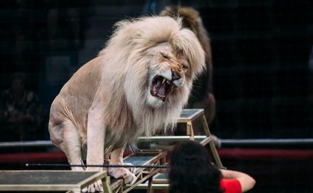 Львы Африки приехали в Тулу