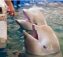 Как живётся дельфинам в Туле