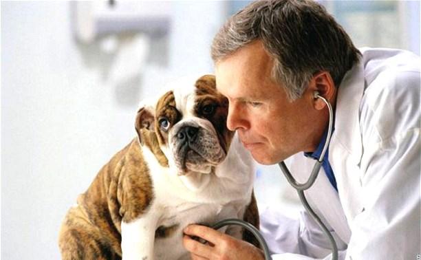 Заболела собака или кошка: в какую ветклинику идти?
