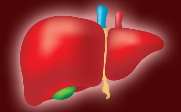 Врач-инфекционист о гепатитах, циррозе и здоровье печени