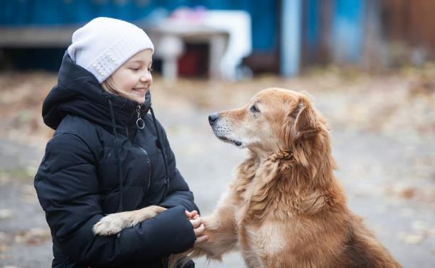 Дворняги, дворяне, двортерьеры: 30 фото самых потрясающих уличных собак
